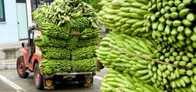 camion di banane