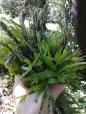 erbe selvatiche e asparagi