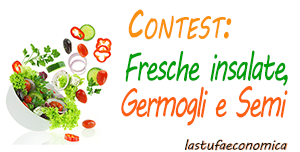 contest insalate